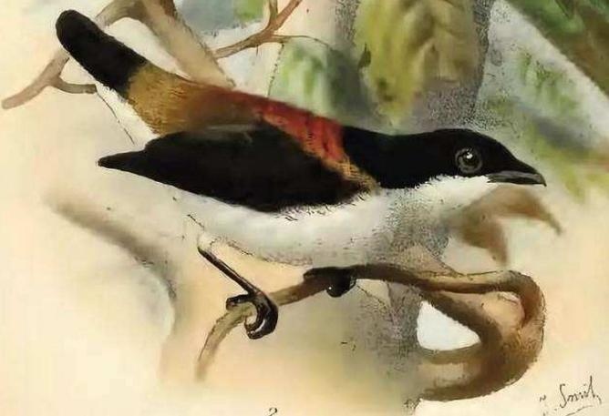 世界十大濒临灭绝的鸟 这些罕见物种,你认识几个