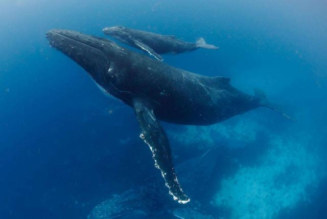 世界最厉害的十大鲸 第一名为蓝鲸,最重能达239吨