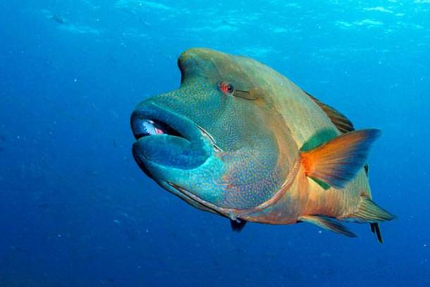 世界十大珍稀海洋动物 这些珍稀生物,你认识几种