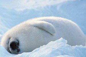全球十大最萌动物 神兽羊驼第三,第一被用来做表情包