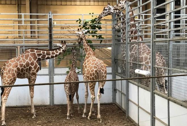 世界最著名十大动物园 赫尔辛基位列第一,中国无一上榜