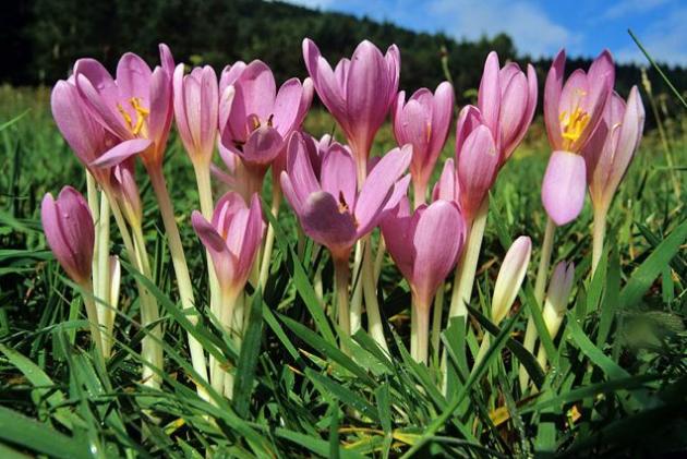世界十大抗癌植物 最天然的养生方式,你知道了吗