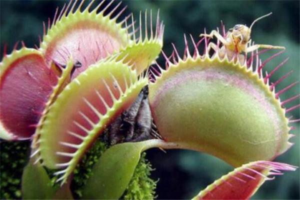 世界十大奇异植物 大戟外观像南瓜,第五个竟然会跳舞