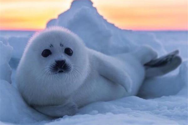 世界十大可爱生物 小熊猫上榜,海獭眼睛小到像没睡醒