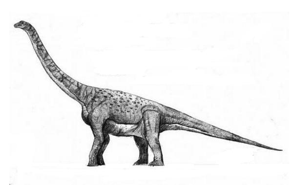 世界最大的十大恐龙 阿根廷龙位列榜首,高度达35米