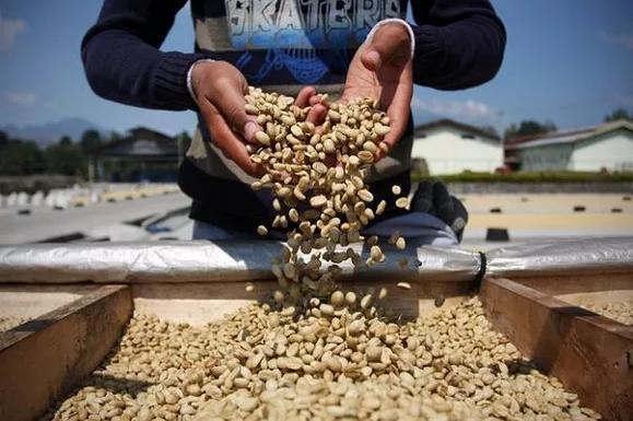 世界最贵的十大奢侈咖啡 第一被誉为传奇,每磅2400元