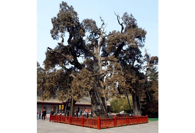 世界最漂亮的十大树 个个美如油画,你认识哪些