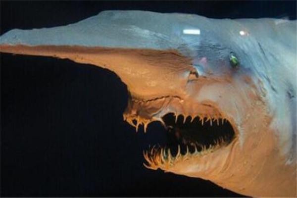 世界十大最丑动物 精灵鲨想变异了似的,第四丑到有点恐怖