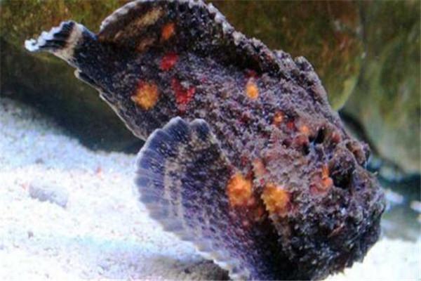 世界十大毒物 澳洲方水母遇见则躲,眼镜王蛇攻击起来毫不留情
