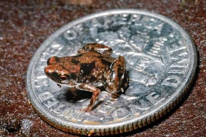 世界十大最小的动物 比指甲还小的青蛙,你见过吗