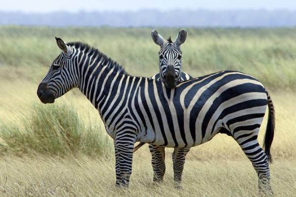 世界最漂亮的十大动物 白虎排第一,黑豹上榜