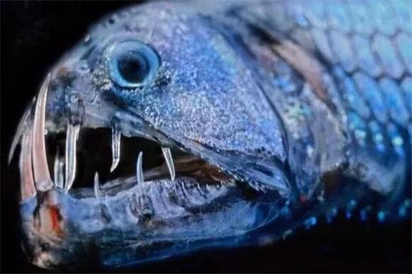 世界十大剧毒鱼 会隐藏的石鱼很难对付,第一被称为吸血鬼
