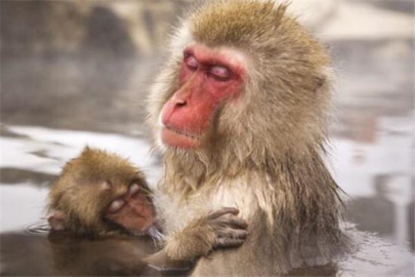 世界十大最珍稀猴子 卷尾猴性情温顺,绒猴体型全球最小