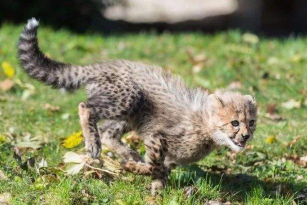 世界十大神奇的动物园 北京动物园上榜,柏林动物园排第一