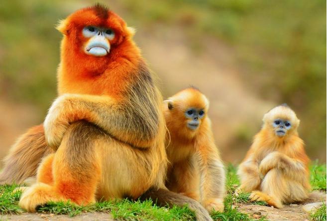 世界十大神奇动物 这些奇特的动物,你见过吗