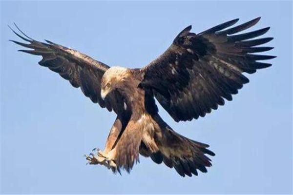 世界十大猛禽实力排名 食猿雕上榜,很多大动物不敌猛雕