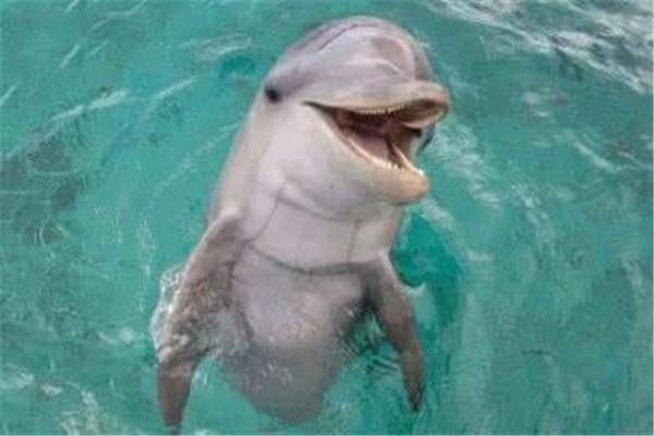 十大恐怖动物杀手 蓝环章鱼上榜,懒猴长相是又萌又可爱