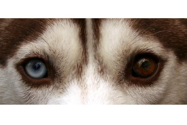 世界最奇特的十大动物的眼睛 感受不一样的视觉世界
