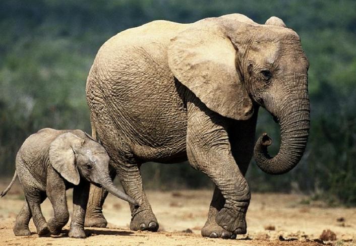世界十大杀手动物 蚊子位列榜首,大象排第七