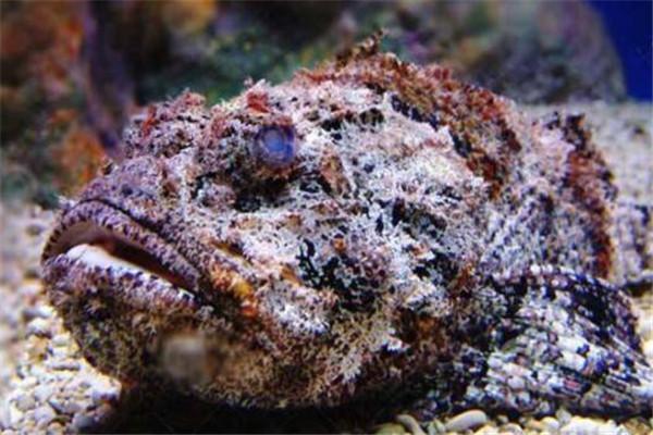 世界十大有毒生物 遇箱形水母必躲,黑曼巴蛇致死率100%