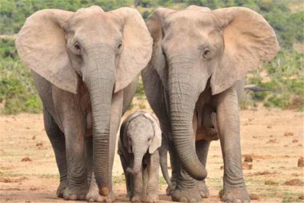 世界十大危险动物排名 大象上榜,第七个你肯定知道