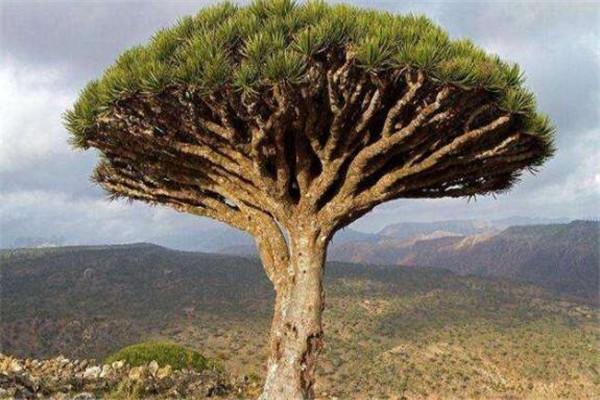 世界十大最神奇的植物大全 食人柳真的会吃人,你见过哪些