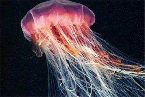 世界十大剧毒水母 澳洲方水母无疑上榜,你认识哪几个