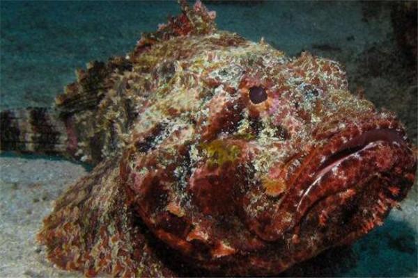 世界毒性最强的十大生物 锥形蜗牛一滴毒液能致死20位成年人