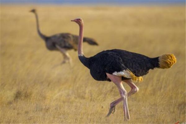 世界最大的动物十大排名 长颈鹿上榜,第五外观看着非常萌
