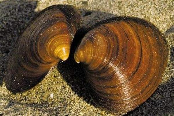 世界十大最长寿动物 乌龟无疑上榜但是最长寿的,第一能永生