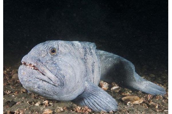 世界十大最古怪的鱼 食人鱼上榜,第一像女巫