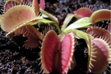 世界十大最危险植物 这些含有剧毒的植物,你认识几个