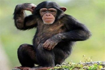 世界十大智商最高的动物  第三和人类DNA有99%相似之处
