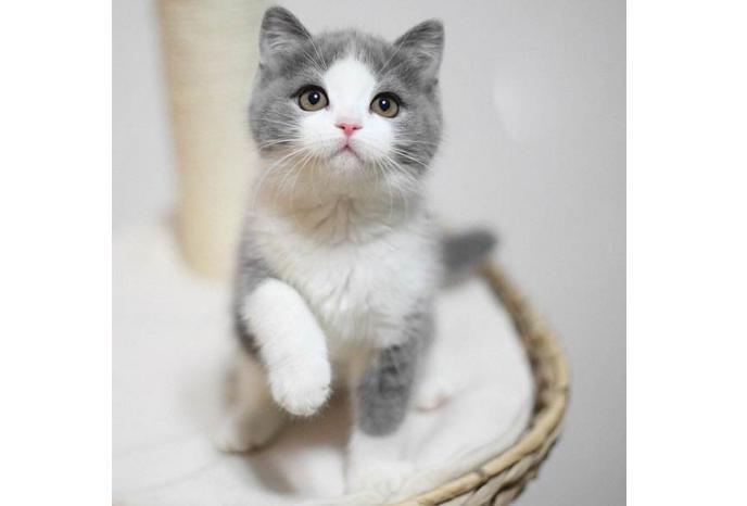 世界十大萌宠排名 猫咪最受宠,哈士奇上榜