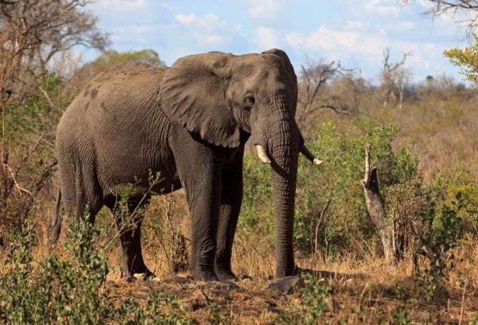 世界上最记仇的五大动物 第一名最可怕,直到死都会记得你