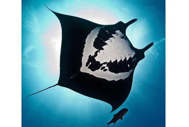 细数世界十大最奇怪的动物 长得像蝙蝠的鱼,你见过吗