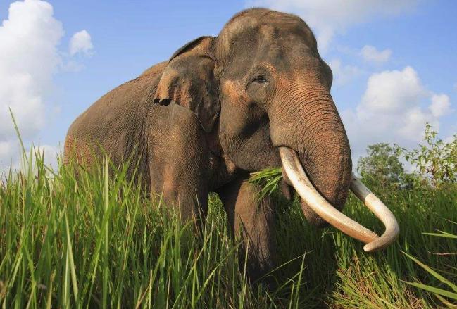 世界十大最稀有的动物 即将消失的物种,你认识几个