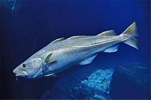 世界十大深海鱼类 线鳗科/囊头鲉亚科等你了解哪几类