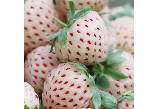 世界十大最贵的水果 这些上万元的水果,你吃过吗