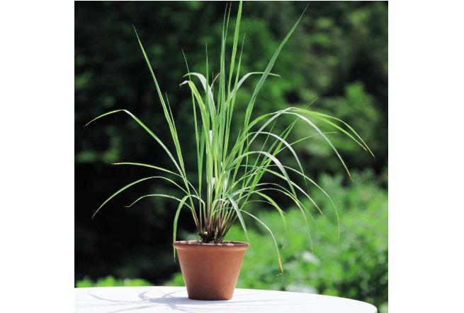 世界十大最香的植物 迷迭香仅排第九,你认识几种