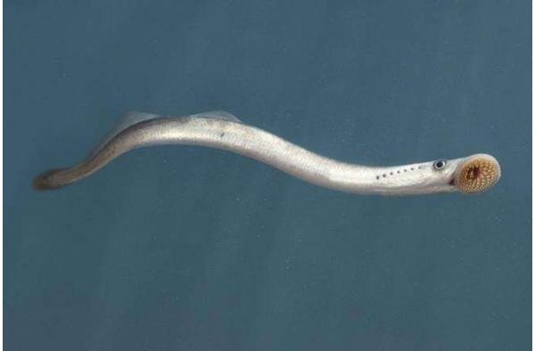 世界十大古老鱼类 这些海底活化石,你认识吗