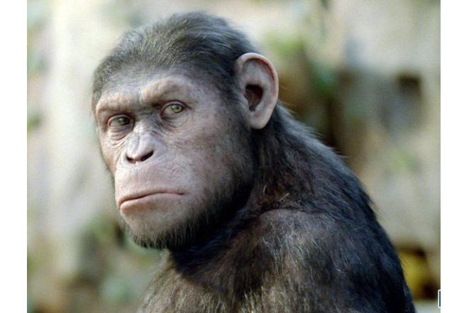 世界最聪明的十大动物排名 章鱼上榜,类人猿最聪明