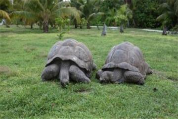 世界最大的十大乌龟 黑海龟数量在减少,榜首基本无争议