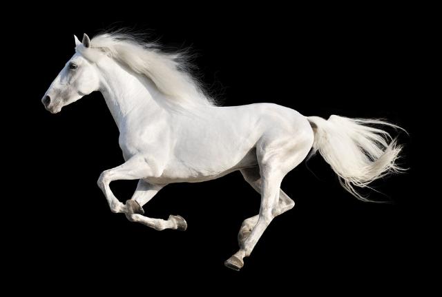 世界十大名马 纯血马位列第一,价值千万美金