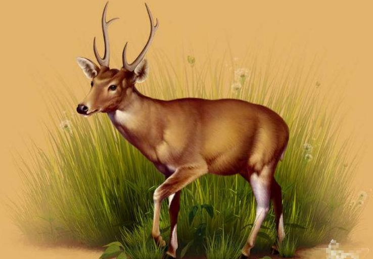 世界已经灭绝的十大可爱动物 这些物种,你认识几个