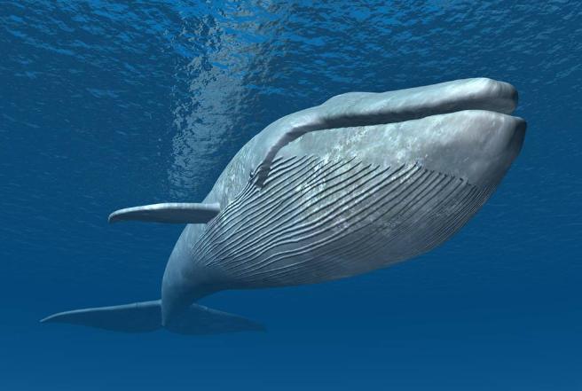世界十大重型动物 蓝鲸位列榜首,体重180吨以上