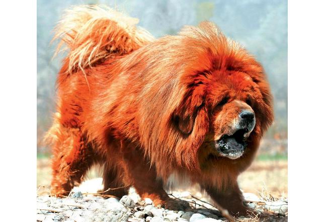 世界十大最昂贵的动物 天价宝马,价值一亿人民币