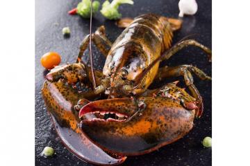 世界七大顶级的龙虾 澳洲龙虾仅排第五,第一为波士顿龙虾