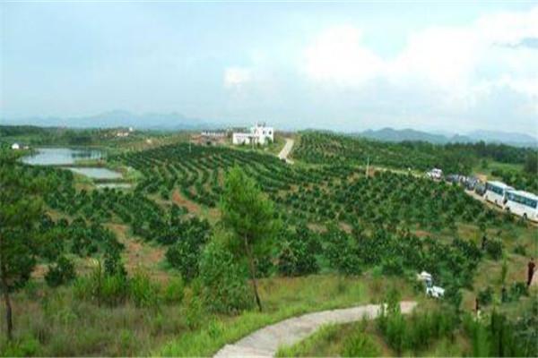滨州十大地方上榜玉山县排名,信丰县是县城之乡暑假有江西v地方脐橙高中哪些的图片