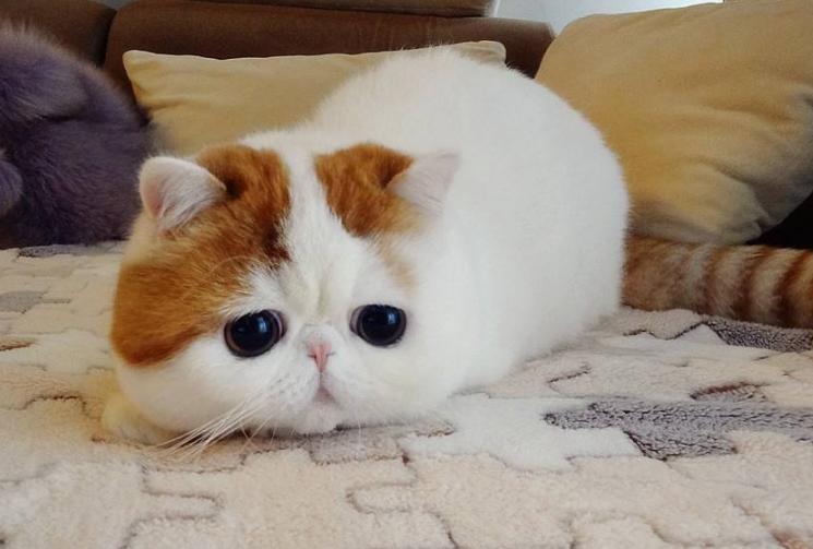 世界十大最漂亮的猫 优雅还是可爱,你喜欢哪种